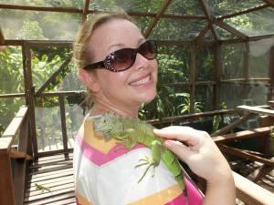 Juvenile iguana.