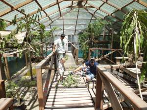 Iguana enclosure.