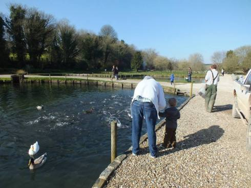 Feeding the fish at Bibury Trout Farm.