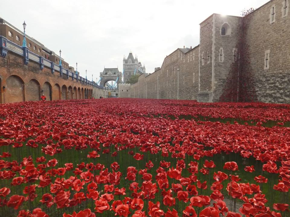 Tower Bridge Poppies Images Poppies With The Tower Bridge