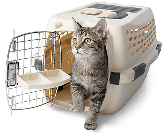 We like the airline-approved travel kennels from Petmate.