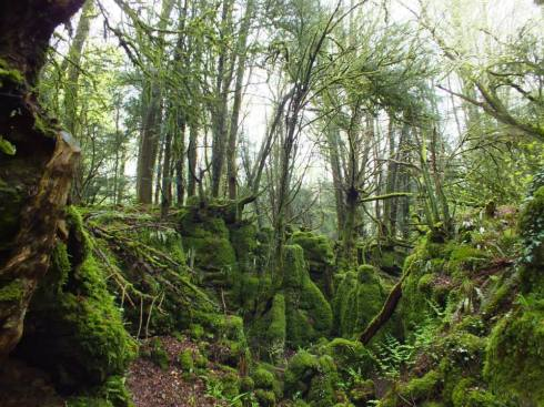 Easy to see why Tolkien would've loved Puzzlewood.