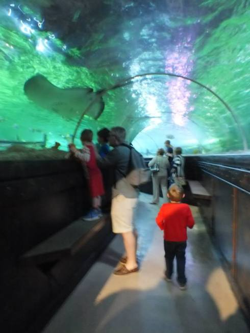 And my favorite part of any aquarium...the underwater tunnel.