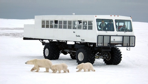 The Tundra Buggy fleet in Churchill, Manitoba, manufactured by Frontiers North Adventures for polar bear tours.