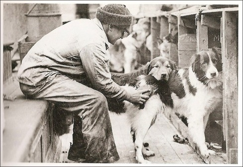 Shackleton dogs on board the Endurance (internet photo).