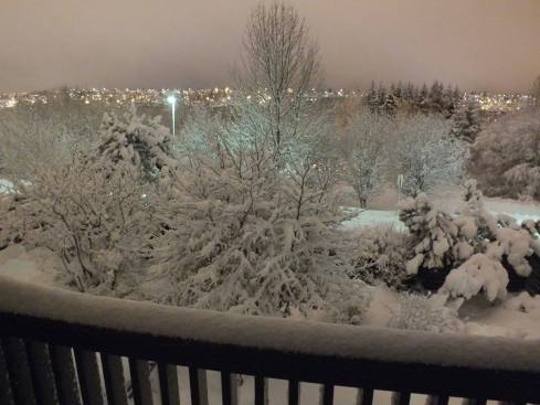 View of the park from our house in Reykjavik in December.